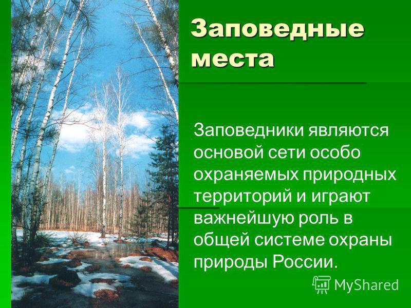Заповедные места Заповедники являются основой сети особо охраняемых природных территорий и играют важнейшую роль в общей системе охраны природы России.