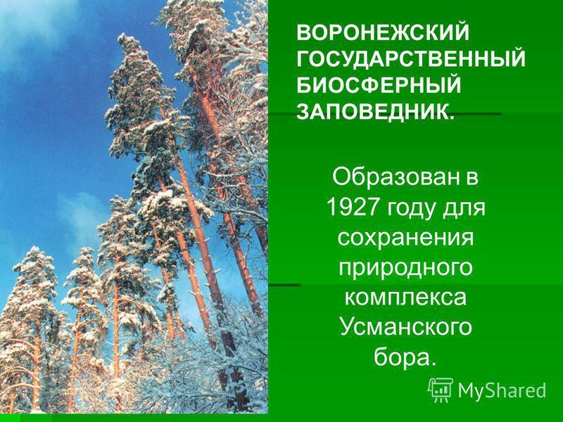 ВОРОНЕЖСКИЙ ГОСУДАРСТВЕННЫЙ БИОСФЕРНЫЙ ЗАПОВЕДНИК. Образован в 1927 году для сохранения природного комплекса Усманского бора.