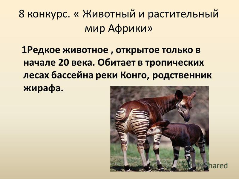 8 конкурс. « Животный и растительный мир Африки» 1Редкое животное, открытое только в начале 20 века. Обитает в тропических лесах бассейна реки Конго, родственник жирафа.
