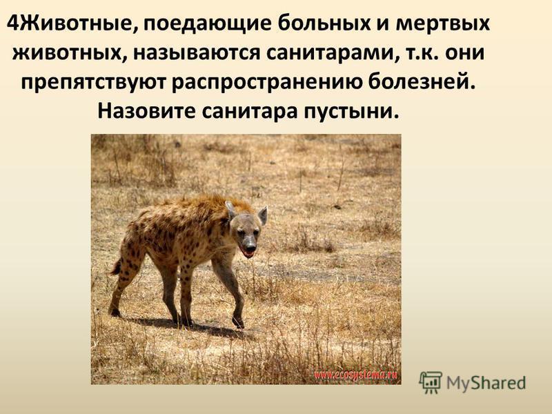 4Животные, поедающие больных и мертвых животных, называются санитарами, т.к. они препятствуют распространению болезней. Назовите санитара пустыни.