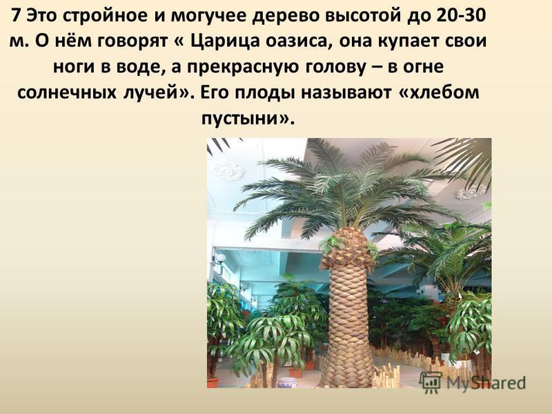 7 Это стройное и могучее дерево высотой до 20-30 м. О нём говорят « Царица оазиса, она купает свои ноги в воде, а прекрасную голову – в огне солнечных лучей». Его плоды называют «хлебом пустыни».