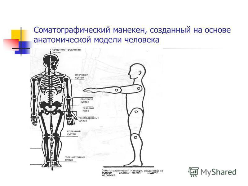 Соматографический манекен, созданный на основе анатомической модели человека основе анатомической модели человека