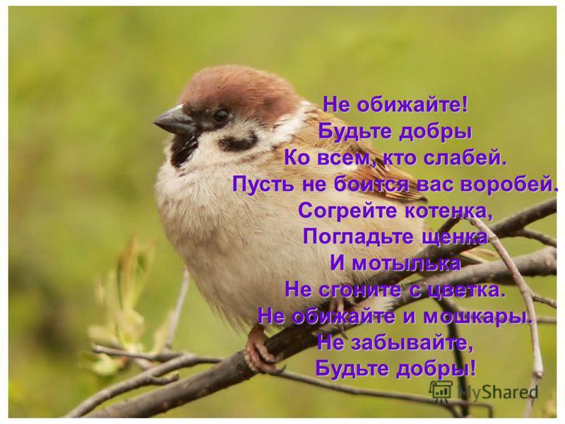 Не обижайте! Будьте добры Ко всем, кто слабей. Пусть не боится вас воробей. Согрейте котенка, Погладьте щенка И мотылька Не сгоните с цветка. Не обижайте и мошкары. Не забывайте, Будьте добры!