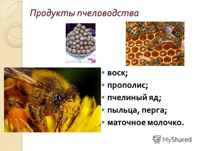 Продукты пчеловодства воск ; воск ; прополис ; прополис ; пчелиный яд ; пчелиный яд ; пыльца, перга ; пыльца, перга ; маточное молочко. маточное молочко.