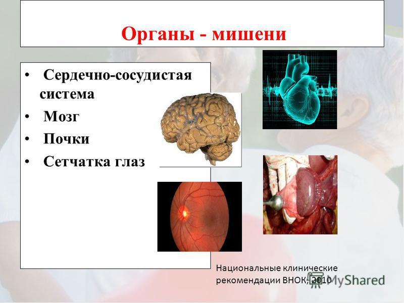 Органы - мишени Сердечно-сосудистая система Мозг Почки Сетчатка глаз Национальные клинические рекомендации ВНОК, 2010