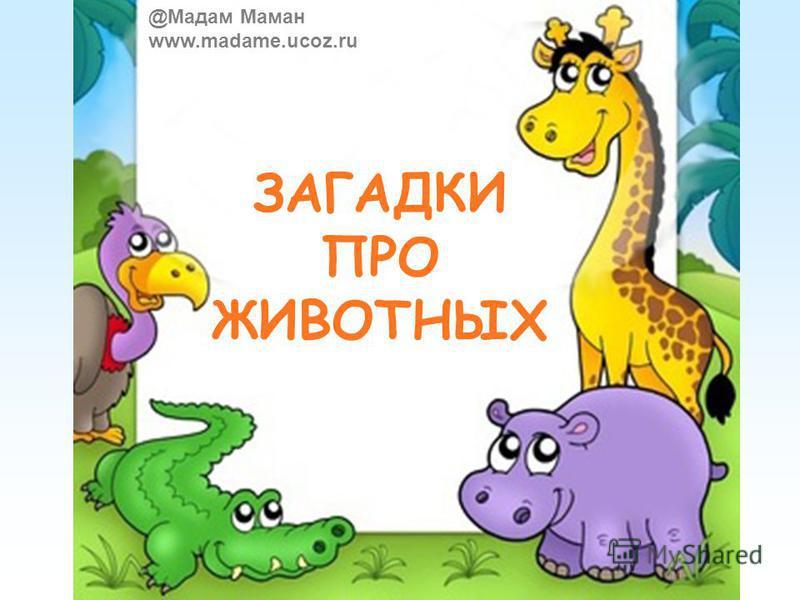 ЗАГАДКИ ПРО ЖИВОТНЫХ @Мадам Маман www.madame.ucoz.ru