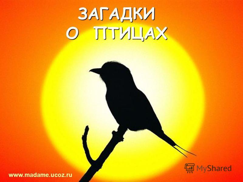 ЗАГАДКИ О ПТИЦАХ www.madame.ucoz.ru