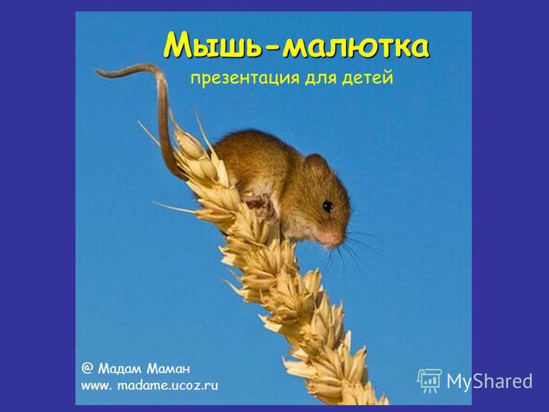 Мышь-малютка презентация для детей @ Мадам Маман www. madame.ucoz.ru