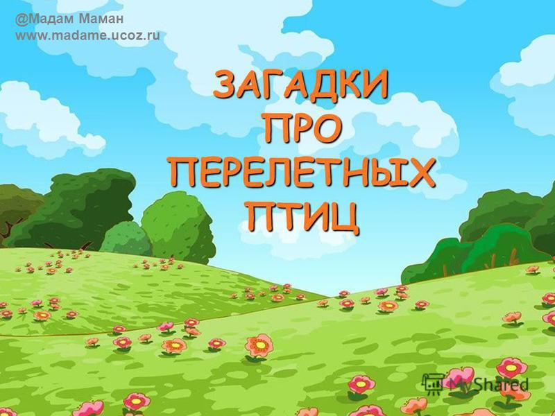 ЗАГАДКИ ПРО ПЕРЕЛЕТНЫХ ПТИЦ @Мадам Маман www.madame.ucoz.ru