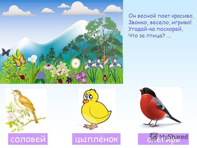 Он весной поет красиво, Звонко, весело, игриво! Угадай-ка поскорей, Что за птица? …. соловей цыплёнок снегирь
