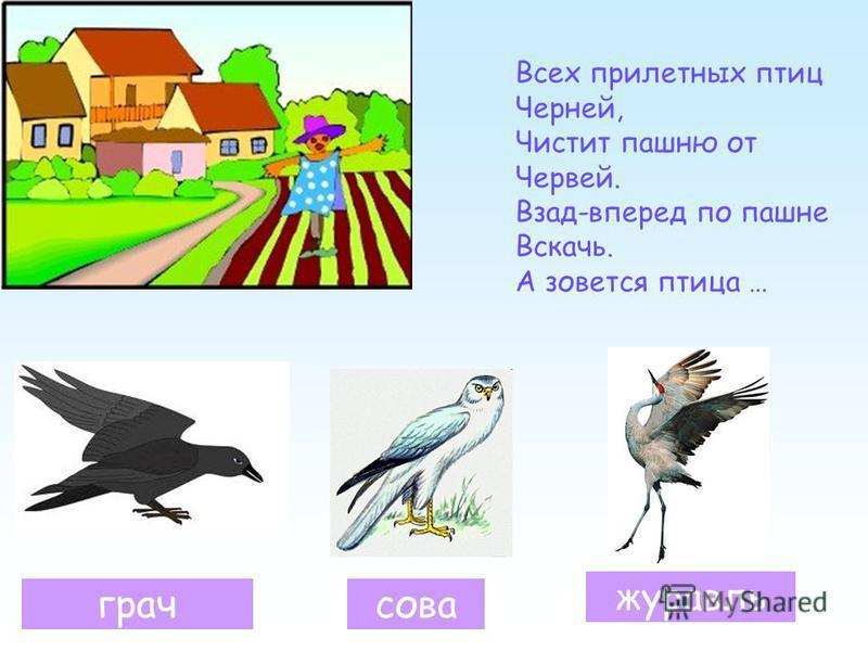 грачсова журавль Всех прилетных птиц Черней, Чистит пашню от Червей. Взад-вперед по пашне Вскачь. А зовется птица …