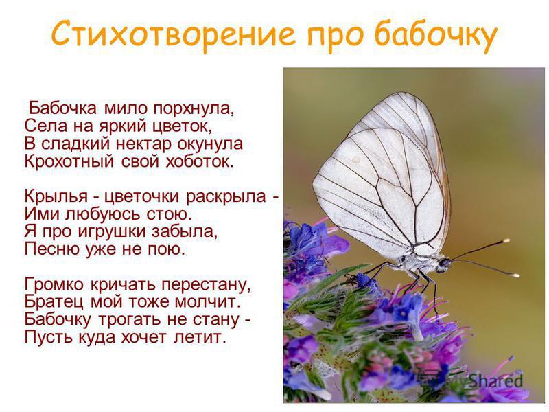 Бабочка мило порхнула, Села на яркий цветок, В сладкий нектар окунула Крохотный свой хоботок. Крылья - цветочки раскрыла - Ими любуюсь стою. Я про игрушки забыла, Песню уже не пою. Громко кричать перестану, Братец мой тоже молчит. Бабочку трогать не