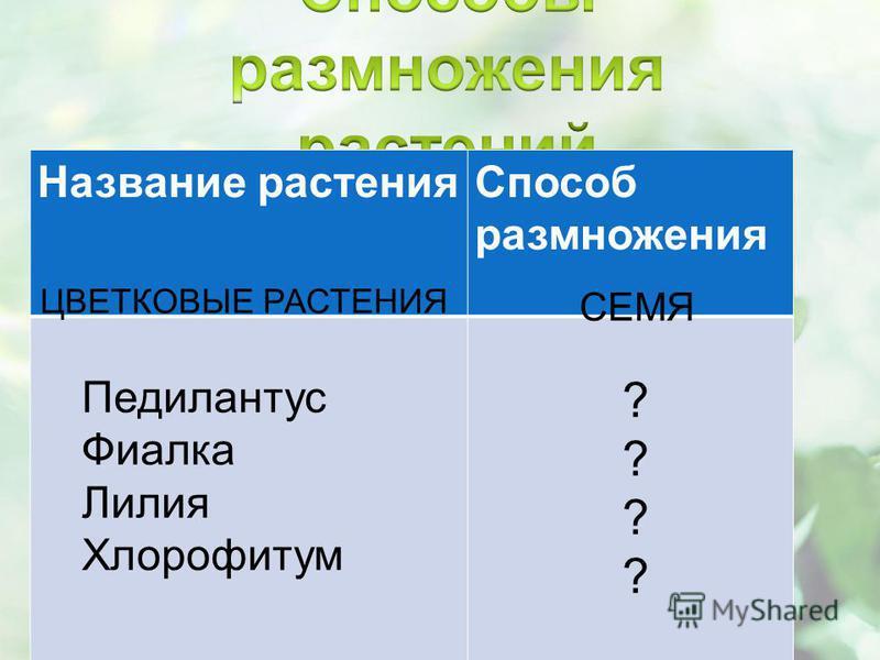 Название растения Способ размножения СЕМЯ ЦВЕТКОВЫЕ РАСТЕНИЯ ???????? Педилантус Фиалка Лилия Хлорофитум