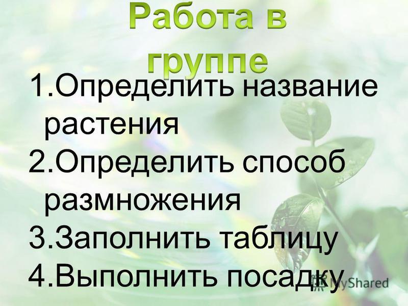 1. Определить название растения 2. Определить способ размножения 3. Заполнить таблицу 4. Выполнить посадку