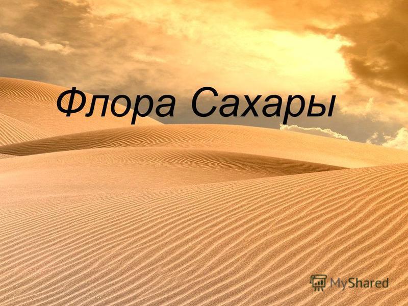 Флора Сахары