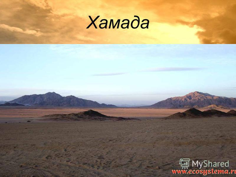 Хамада