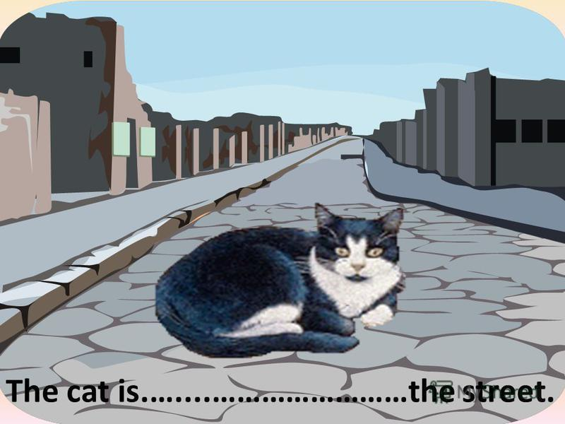 The cat is.…....……………………the street. in the middle of