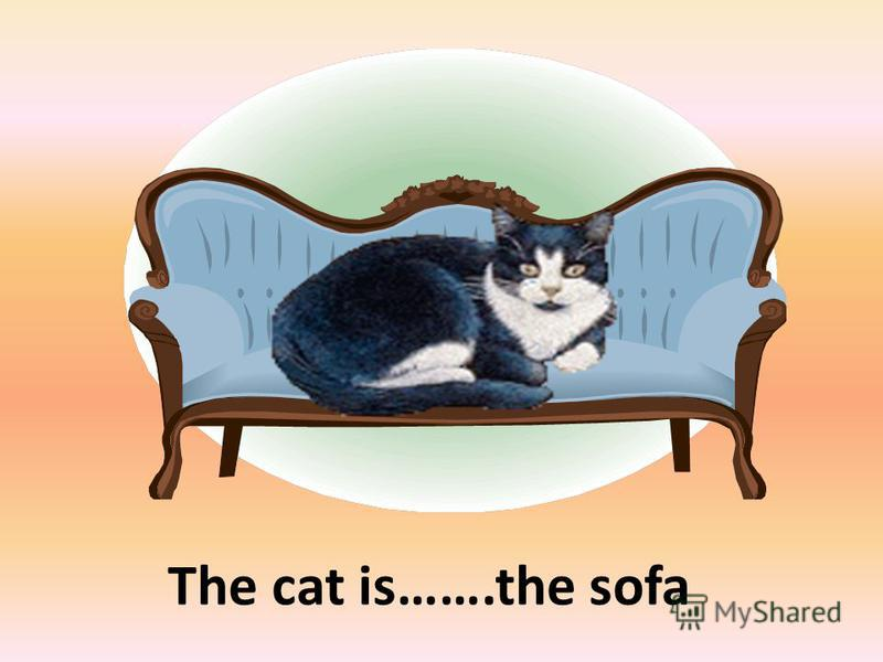 The cat is…….the sofa on