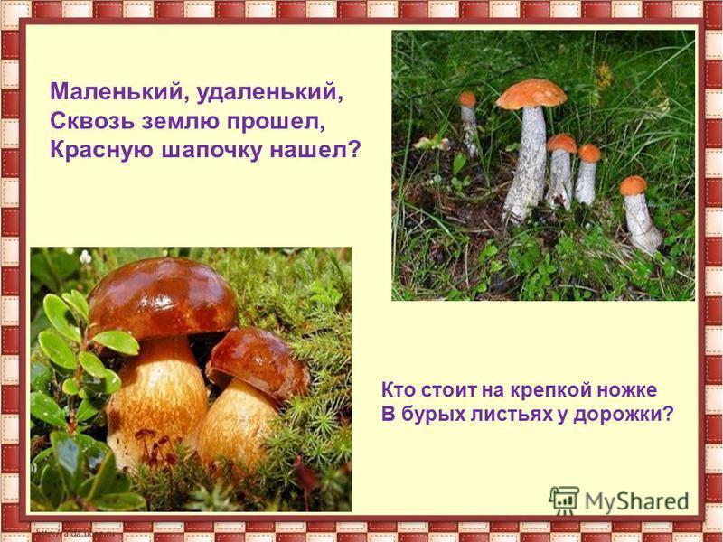 Маленький, удаленький, Сквозь землю прошел, Красную шапочку нашел? Кто стоит на крепкой ножке В бурых листьях у дорожки?