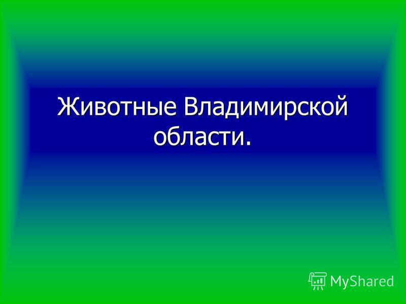 Животные Владимирской области.