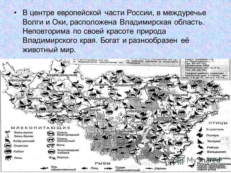 В центре европейской части России, в междуречье Волги и Оки, расположена Владимирская область. Неповторима по своей красоте природа Владимирского края. Богат и разнообразен её животный мир.