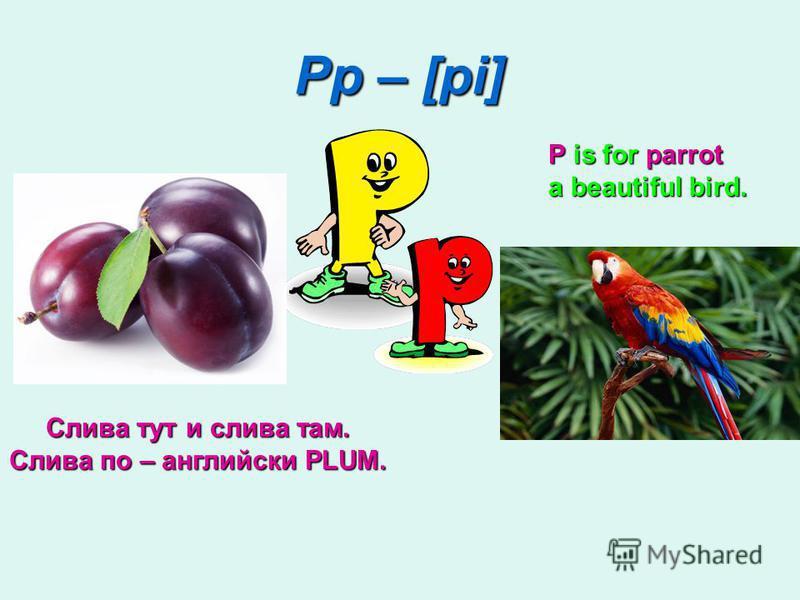 Pp – [pi] P is for parrot a beautiful bird. Слива тут и слива там. Слива по – английски PLUM.