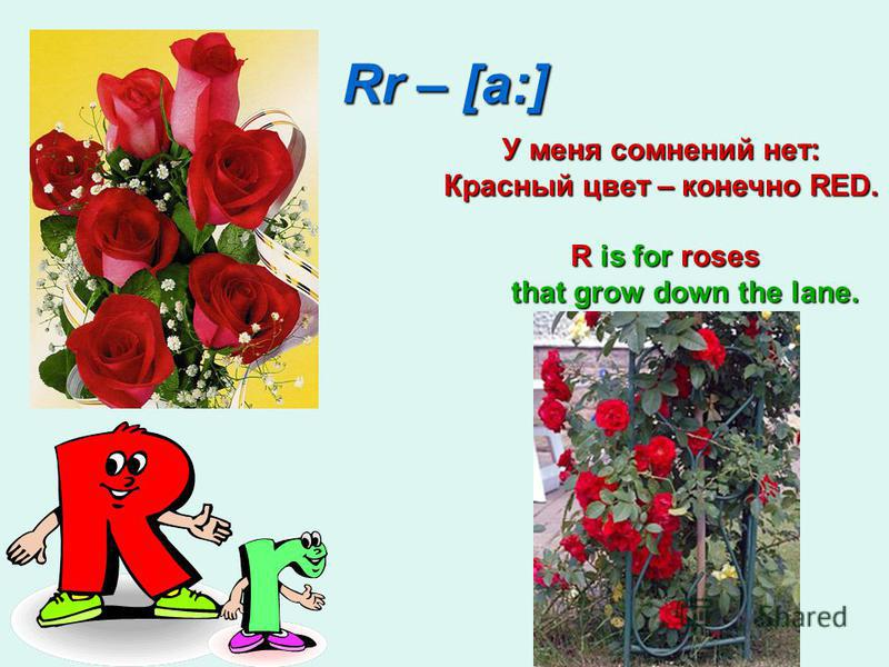 Rr – [a:] У меня сомнений нет: Красный цвет – конечно RED. R is for roses that grow down the lane. R is for roses that grow down the lane.