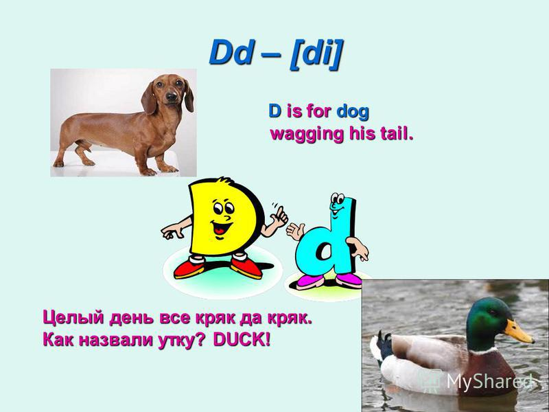 Dd – [di] D is for dog wagging his tail. D is for dog wagging his tail. Целый день все кряк да кряк. Как назвали утку? DUCK!