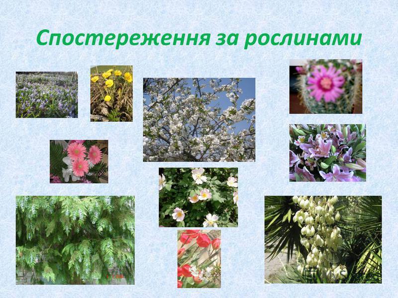Спостереження за рослинами