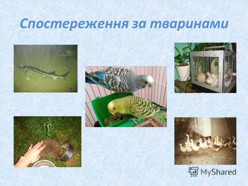 Спостереження за тваринами