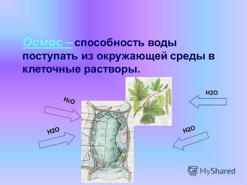Вода в жизни растений Поступление минеральных веществ Участие в фотосинтезе Прорастание семян