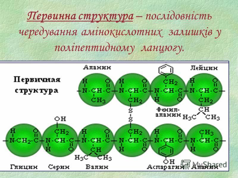 Первинна структура – послідовність чередування амінокислотних залишків у поліпептидному ланцюгу.
