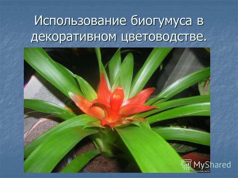 Использование биогумуса в декоративном цветоводстве.