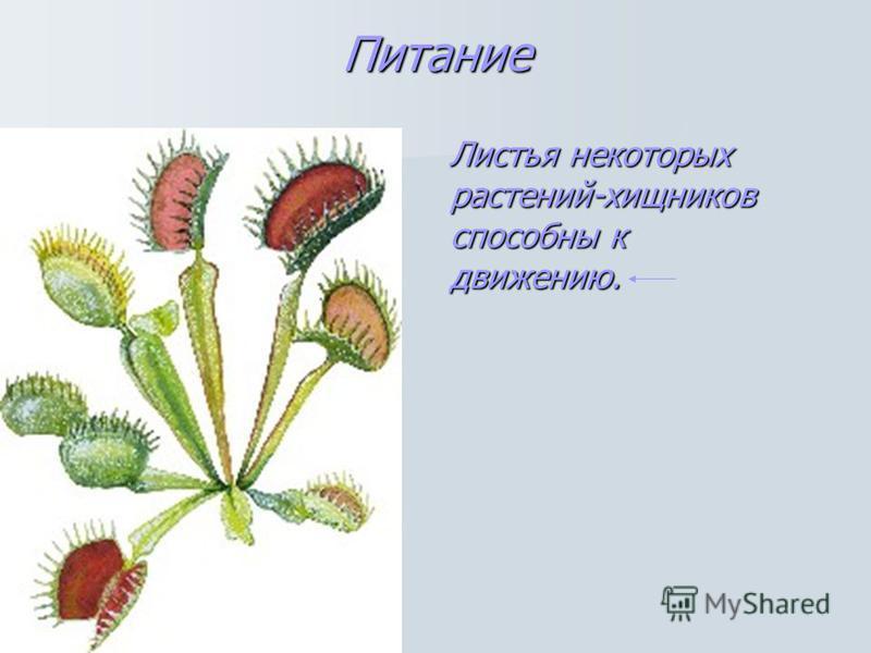 Питание Листья некоторых растений-хищников способны к движению.