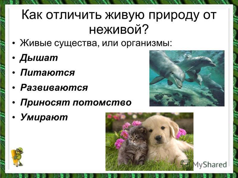 Как отличить живую природу от неживой? Живые существа, или организмы: Дышат Питаются Развиваются Приносят потомство Умирают