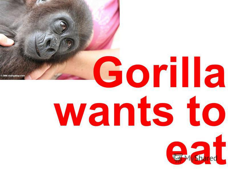 Gorilla wants to eat