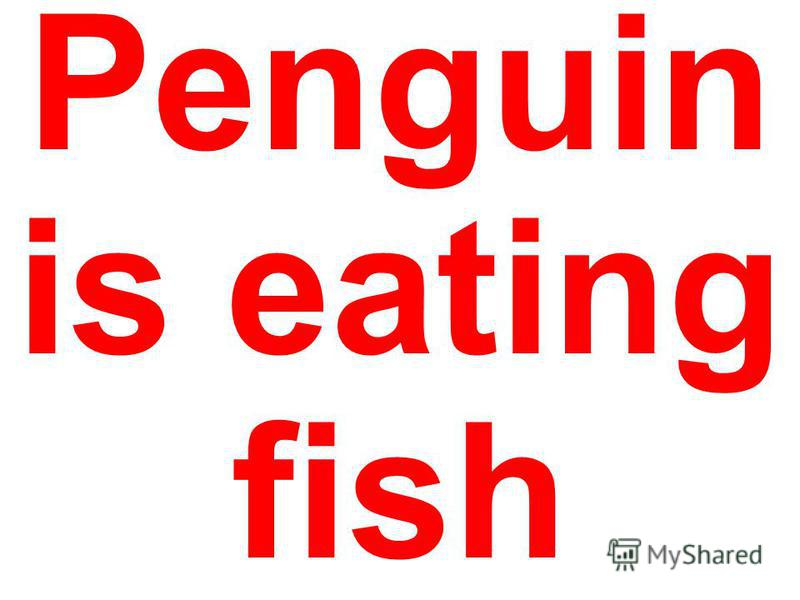 Penguin is eating fish