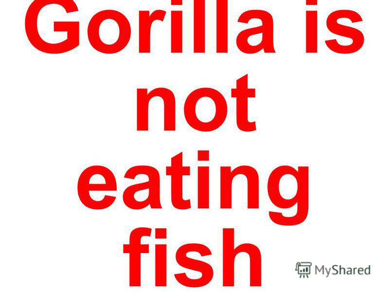 Gorilla is not eating fish