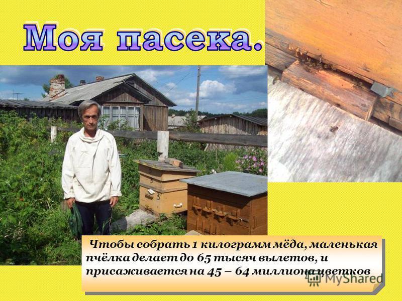 Чтобы собрать 1 килограмм мёда, маленькая пчёлка делает до 65 тысяч вылетов, и присаживается на 45 – 64 миллиона цветков