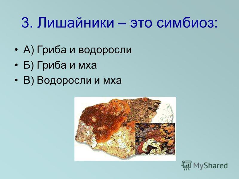 3. Лишайники – это симбиоз: А) Гриба и водоросли Б) Гриба и мха В) Водоросли и мха