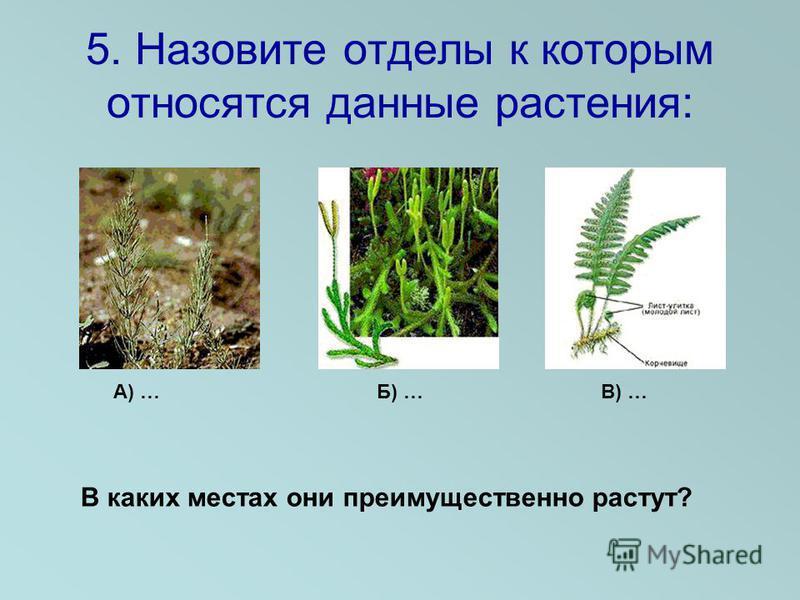 5. Назовите отделы к которым относятся данные растения: А) … Б) … В) … В каких местах они преимущественно растут?