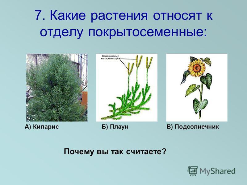 7. Какие растения относят к отделу покрытосеменные: А) Кипарис Б) Плаун В) Подсолнечник Почему вы так считаете?