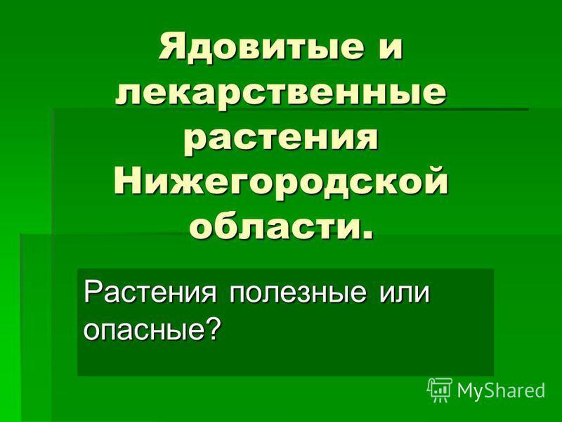 Ядовитые и лекарственные растения Нижегородской области. Растения полезные или опасные?