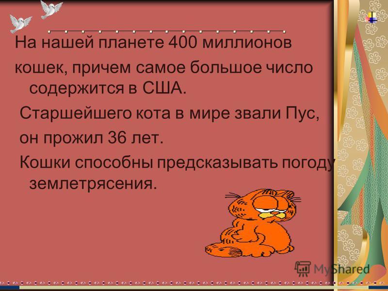 На нашей планете 400 миллионов кошек, причем самое большое число содержится в США. Старшейшего кота в мире звали Пус, он прожил 36 лет. Кошки способны предсказывать погоду землетрясения.