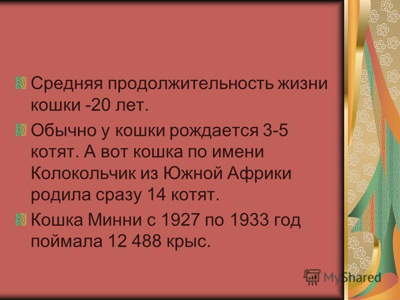 Средняя продолжительность жизни кошки -20 лет. Обычно у кошки рождается 3-5 котят. А вот кошка по имени Колокольчик из Южной Африки родила сразу 14 котят. Кошка Минни с 1927 по 1933 год поймала 12 488 крыс.