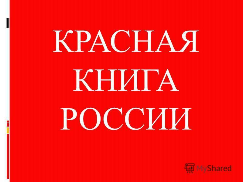 Красная книга Красная книга – Красная! Значит природа в опасности! Значит, нельзя терять даже мига. Всё живое хранить зовёт, Пусть зовёт не напрасно Красная книга. И тревога за жизнь неустанна, Чтоб не сгинуть в Космической мгле! Исчерпаемы все океан