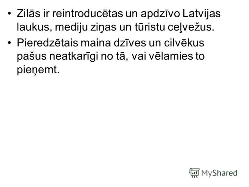 Zilās ir reintroducētas un apdzīvo Latvijas laukus, mediju ziņas un tūristu ceļvežus. Pieredzētais maina dzīves un cilvēkus pašus neatkarīgi no tā, vai vēlamies to pieņemt.