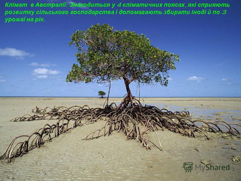 Клімат в Австралії : Знаходиться у 4 кліматичних поясах, які сприяють розвитку сільського господарства і допомагають збирати іноді й по 3 урожаї на рік.