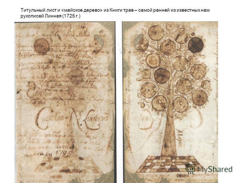 Титульный лист и «майское дерево» из Книги трав – самой ранней из известных нам рукописей Линнея (1725 г.)