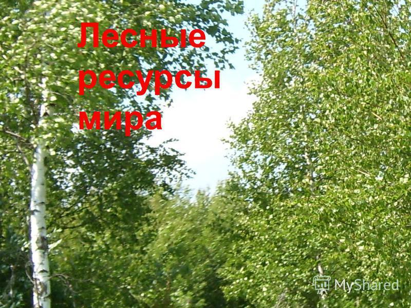 Лесные ресурсы мира